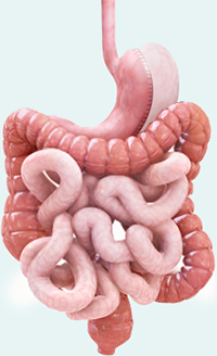 Sleeve Gastrectomy Takes the Lead